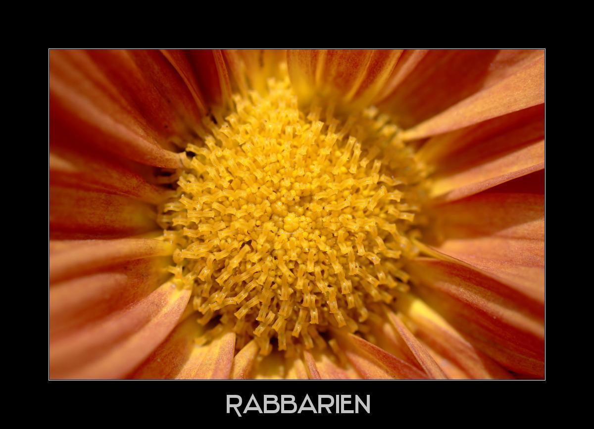 Bilddatenbank Blumenbilder