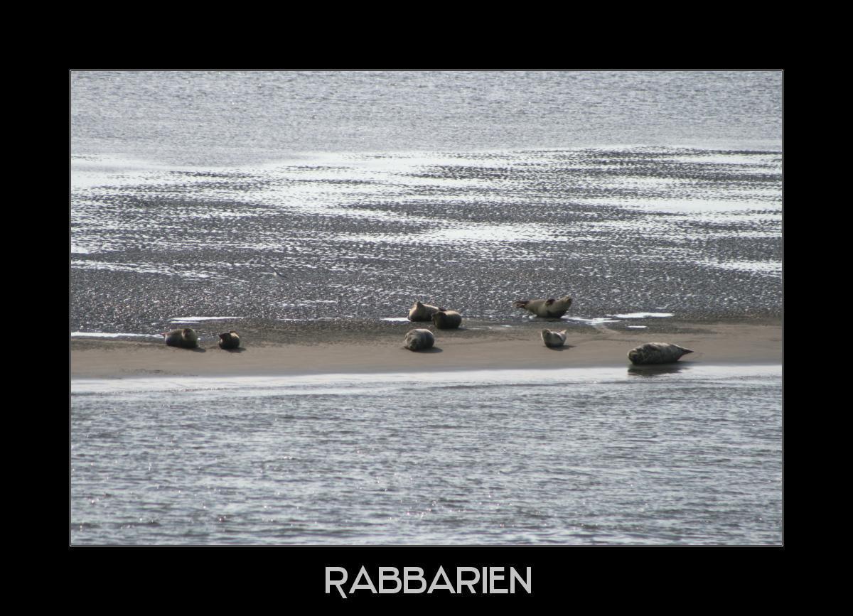 Seehundbank in der Nordsee