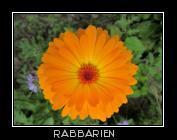 Blumenbilder bilder von blumen blumenfotos