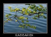 Zweig Über Wasser